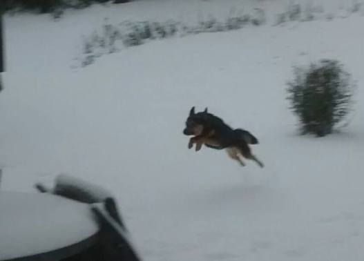 jack leaping