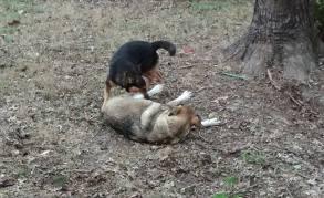 Jack & Sookie