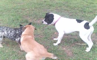 Bella, Dingus & Gracie